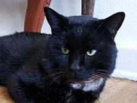 Tony's story Here I am! Tony, the friendly DSH black