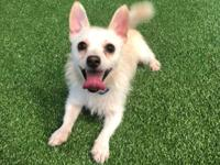 Toodles is a 1 yr old small male terrier mix about 7