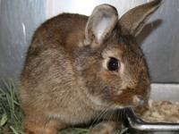 age, gender, spay/neuter status    Did you know rabbits