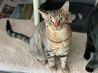 My story Toonces is playful and friendly, a very social