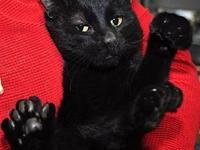 Toothless C2521's story You can fill out an adoption