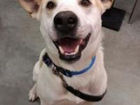 Topher's story Topher is a male shepherd mix who was
