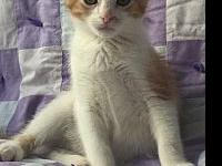Topper's story Topper is a beautiful slender boy. He