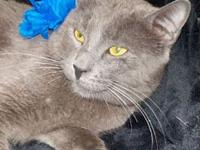 Topper's story Breed: Korat Color: Blue Sex: Male Age: