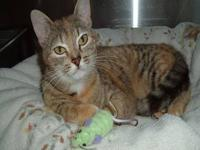 Torbie - Cara - Small - Baby - Female - Cat Cara was