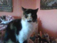 Torbie - Carol - Medium - Adult - Female - Cat Carol is