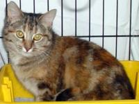 Torbie - Lovely Lily - Medium - Adult - Female - Cat I