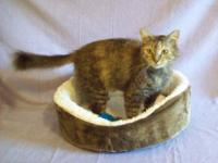 Torbie - Mama Spice - Small - Adult - Female - Cat Meet
