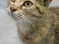 Torbie - Mona - Small - Adult - Female - Cat Mona is a