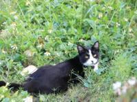 Torbie - Montana - Medium - Young - Female - Cat Did