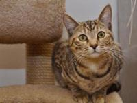 Torbie - Supermodel Elle - Small - Young - Female -