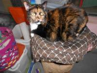 Torbie - Wendy2 - Small - Young - Female - Cat