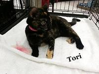 Tori's story For more information call the foster