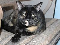 Tori's story Tori is a shy but sweet girl who loves