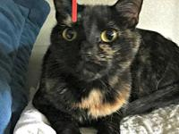 Torti's story Torti is a stunning 2 year old