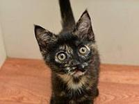 Torti's story I'm a fun loving little girl with a big