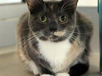Torti's story Primary Color: Tortoiseshell Weight: