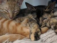Tortie and Red- bonded pair's story Red and his sister