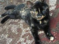 Tortie's story ** Contact info: email