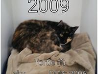 Tortie's story This shy honey needs someone to love.