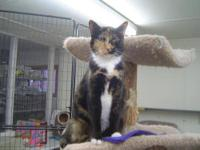 Tortoiseshell - Amber - Medium - Adult - Female - Cat