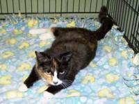 Tortoiseshell - Amber - Medium - Adult - Female - Cat