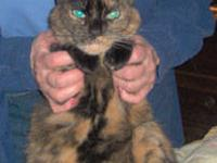 Tortoiseshell - Big Bertha - Medium - Adult - Female -