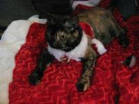 Tortoiseshell - Callie - Small - Senior - Female - Cat