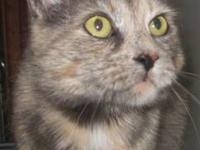 Tortoiseshell - Cashmere - Small - Senior - Female -