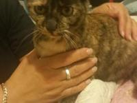 I have a young, small, female cat 6 months old for a
