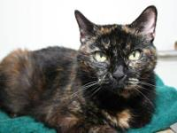 Tortoiseshell - Cerulea - Medium - Adult - Female -