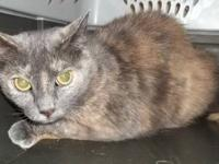 Tortoiseshell - Cinder - Medium - Young - Female - Cat