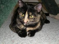 Tortoiseshell - Cookie - Small - Young - Female - Cat