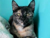Tortoiseshell - Eclipse - Medium - Young - Female -