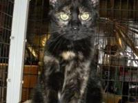 Tortoiseshell - Elaine - Medium - Young - Female - Cat