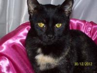 Tortoiseshell - Emma - Medium - Young - Female - Cat
