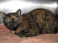 Tortoiseshell - Gina - Medium - Adult - Female - Cat Hi