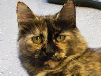 Tortoiseshell - Heather - Medium - Young - Female -