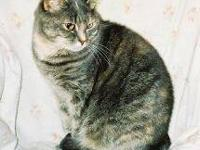 Tortoiseshell - Keller - Medium - Adult - Female - Cat