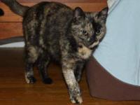 Tortoiseshell - Kia - Large - Young - Female - Cat Kia