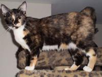 Tortoiseshell - Lisa Marie - Medium - Young - Female -