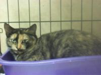 Tortoiseshell - Lola - Medium - Young - Female - Cat