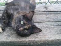 Tortoiseshell - Meadow - Small - Young - Female - Cat