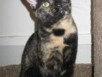 Tortoiseshell - Miss Kitty! - Small - Adult - Female -