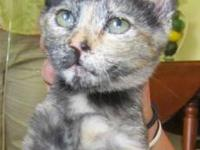 Tortoiseshell - Monkey - Small - Baby - Female - Cat