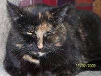 Tortoiseshell - Natalie - Medium - Adult - Female -