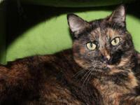 Tortoiseshell - Patty Cat - Small - Adult - Female -