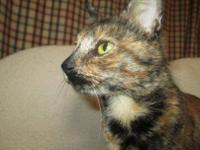 Tortoiseshell - Peanut - Small - Adult - Female - Cat