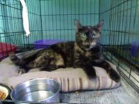 Tortoiseshell - Pepper - Medium - Adult - Female - Cat
