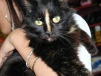 Tortoiseshell - Perky - Small - Young - Female - Cat